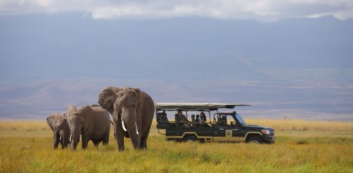 2-Day Amboseli Safari