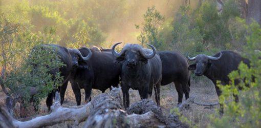 4-Day Safari at Aberdare National Park
