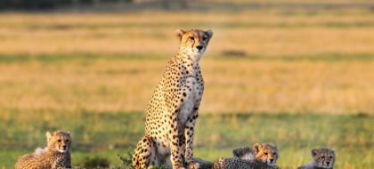 5-Day Maasai Mara Migration Flying Package