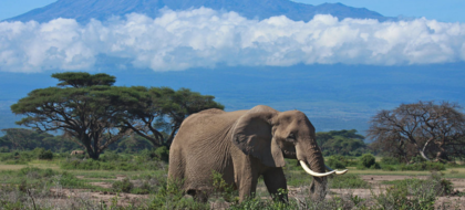 3-Day Amboseli Safari
