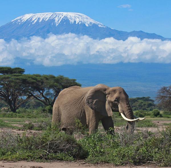 3-Day Amboseli Safari