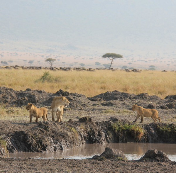 5-Day Nairobi Mara & Naivasha Safari