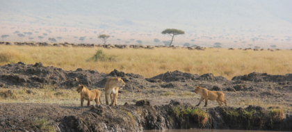 6-Day Kenya Safari