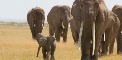 2-Day Mombasa to Amboseli Safari