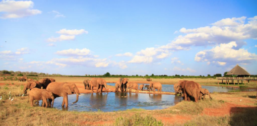 2-Day Mombasa to Tsavo East Overnight Safari