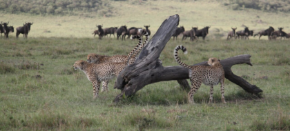 2-Day Massai Mara Safari