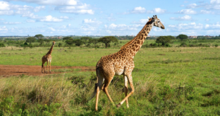 Nairobi National Park & Elephant Orphanage Tour
