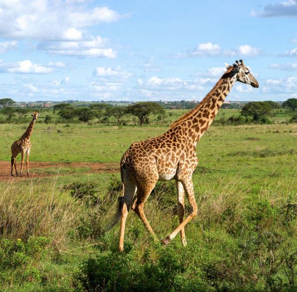 Nairobi National Park & Elephant Orphanage Tour