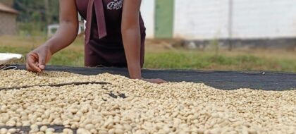 Coffee Farm & Tasting Excursion