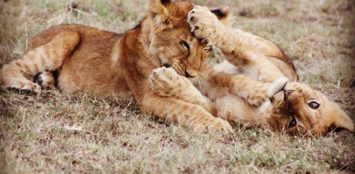 7-Day Wildlife Safari