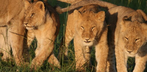 6-Day Amboseli, Lake Naivasha & Maasai Mara