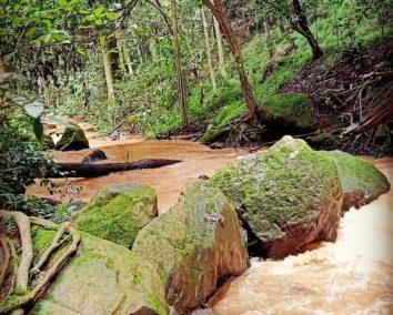 Visit to Arabuko Sokoke Forest