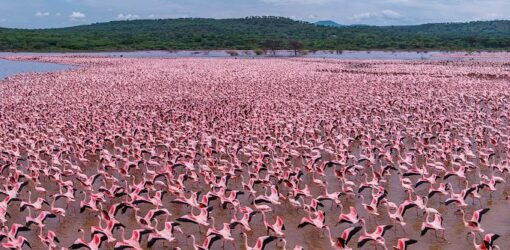 Full Day Lake Bogoria Trip