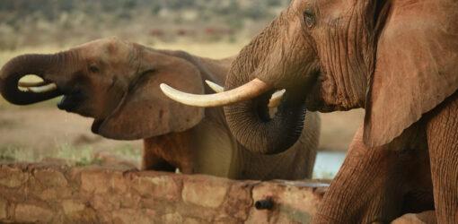 Full Day Tsavo East Safari (Mombasa)