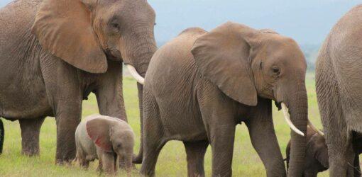7-Day Big Five Safari