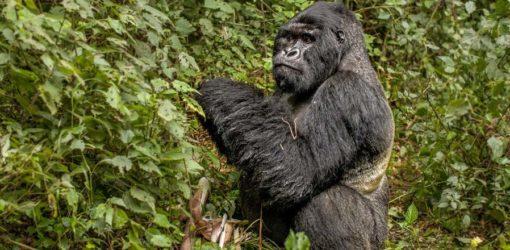 3-Day Rwanda Gorilla Trekking Safari