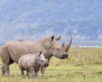 7-Day Aberdares, Samburu, L. Nakuru & Massai