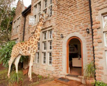 8-Day Nairobi, Amboseli, L. Naivasha, & Maasa