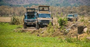 Safari to Serengeti & Ngorongoro