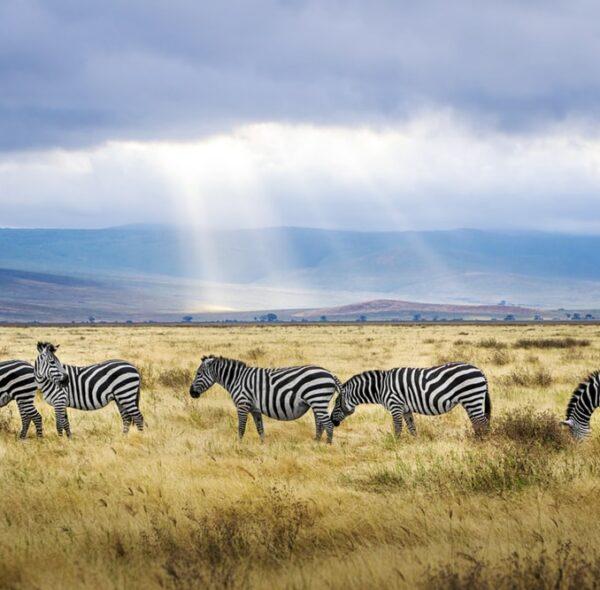Tarangire National Park Tour