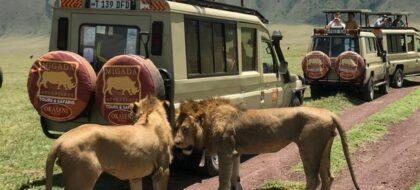 Arusha-Ngorongoro Tour