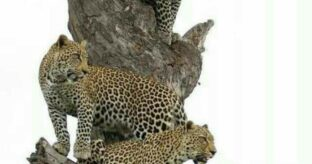 Arusha-Tarangire-Ngorongoro-Arusha