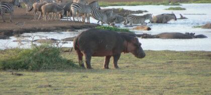 Safari to Ngorongoro & Lake Manyara N. Park