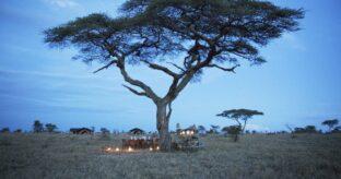 Safari to Arusha & Serengeti